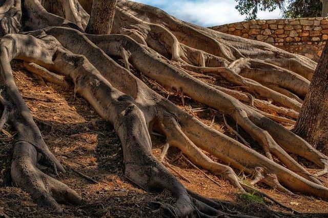 木の根っこのイメージ図