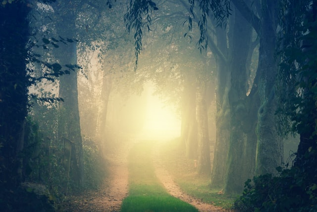 林の中の一本道。