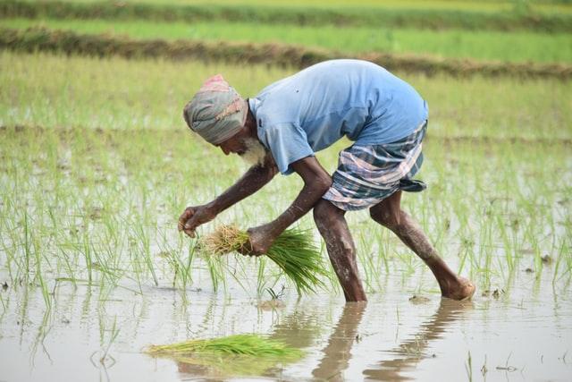 農業する人間