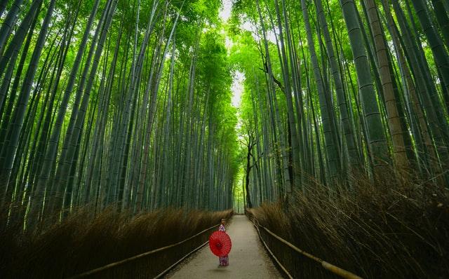 竹林に囲まれた一本の道